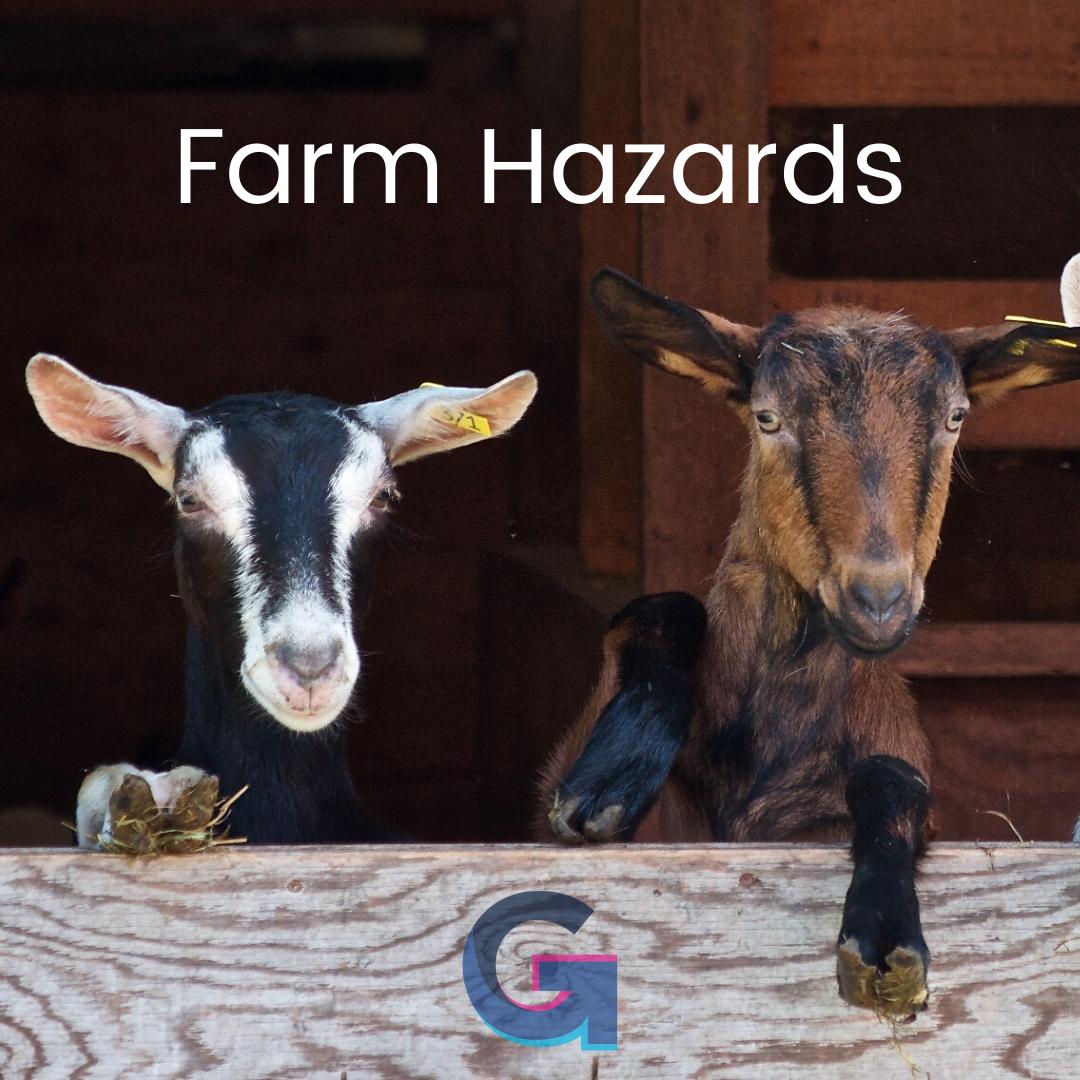 Farm hazards - goats, animals